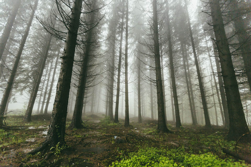 fog trees - https://pixabay.com/en/fog-forest-nature-trees-woods-1837025/